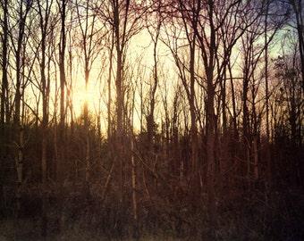 sunset photo, tree photo, forest, light, golden, purple, bare trees, home decor, texture, ontario, rural, autumn, landscape, sunset, trees
