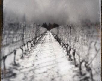 vineyard photo, wine photo, black and  white, snow, wine, winery, home decor, landscape, winter, ontario, niagara, wine country, grapevines