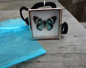 Blue butterfly necklace - glass shadowbox pendant - Miniature Butterfly Collection Display Case - Vegan
