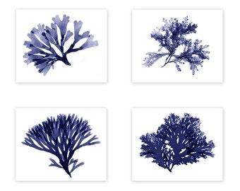 Seaweed Prints, Navy Blue Beach Nautical Decor Wall Set, Seaweed Art, Coastal Beach Decor, Blue Ocean Botanicals
