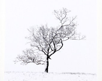 Lone Tree, Winter Landscape, White Snow, Square Wall Art, Wood Mounted, Ready to Hang, Photography