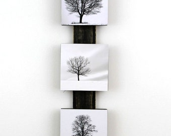 Winter Tree Triptych,  Lone Trees, Snow, Black, White,  Minimalist Art, Wall Decor, Ready to Hang, Nature Photography