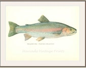 Vintage Fish Print, 1970, Rainbow Trout, Female, Salmo gairdneri (39) Salt, Fresh Water, Jiri Maly, Ichthyology,