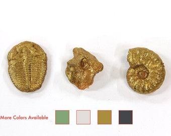 Fossil Magnet set