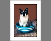 Cat Notecard Set Cats in a Blue and White Bowl 1987 to 2009