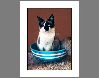Cat Photo Card Set Cats in a Blue and White Bowl 1987 to 2009