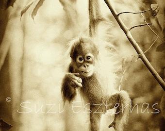 50% OFF SALE, Cute Baby Orangutan Photo, Vintage Sepia Print, Baby Animal Photography, Child Room, Nursery Wall Art, Baby Animal Print, Kids