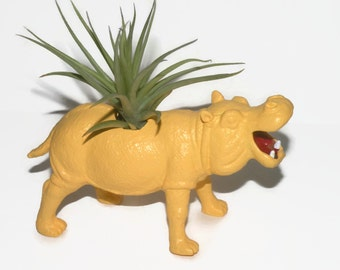 Air plant in repurposed toy hippo animal planter.