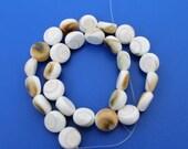 Beautiful Shiva Eye Shell Polished Beads 14mm - 16 Inch Strand