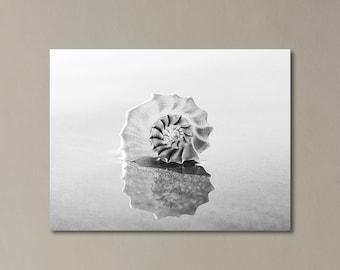 Black And White Canvas Wall Art, Seashell Photograph, Beach Decor, Large Beach Art, Beach House Wall Art, Coastal Home, Beach Gallery Wrap