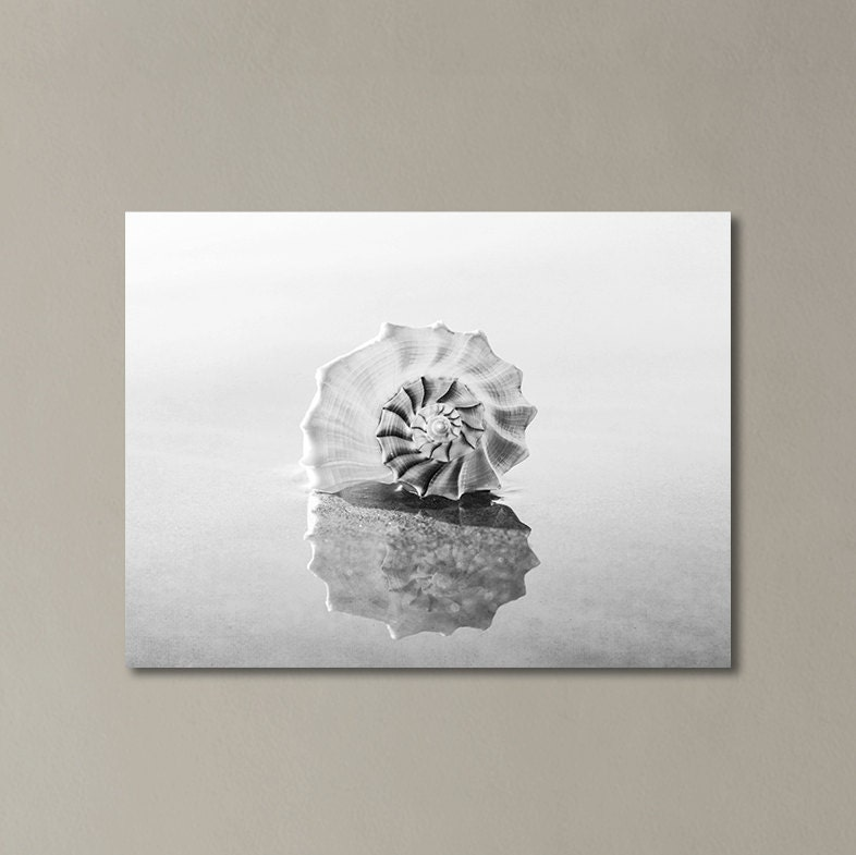 black and white canvas wall art seashell photograph beach. Black Bedroom Furniture Sets. Home Design Ideas