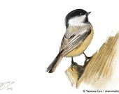 "Black Capped Chickadee Print, Wildlife Illustration, Cute Bird Drawing, Nursery Art  4"" x 6"" BCC"