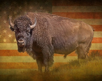 American Buffalo Bison Wild Animal with American Stars and Stripes Flag No.3586FL - A Wildlife Animal Landscape Nature Photograph
