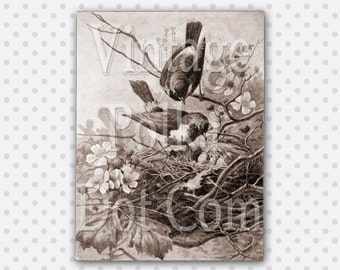 Vintage Clip Art Bird Nest Blossoms Baby Birrds Printable Digital Instant Download Scrapbook Print Art Craft in Sepia Tone