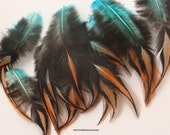 Blue Orange Craft Supplies Feather Decorative Aqua Blue Orange Two Toned Feathers Laced Rooster Feathers Craft Feathers QTY12 3-4inch