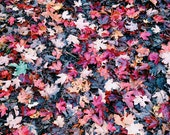 Fall, leaf, maple, autumn, nature, square, leaves, orange, brown, red, green, rain, water, black, 8x8, photograph