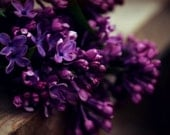 Lilac Floral Photography deep purple,spring,lilacs,aubergine,periwinkle,vividly colored,elegant floral,dramatic wall decor,nature,flowers