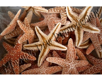 Seastars - Matted photograph of dried starfish for sale in Tarpon Springs, Florida.