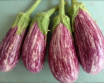 Shooting Stars Purple Striped Eggplant Rare Seeds Grown to Organic Standards Best Seller