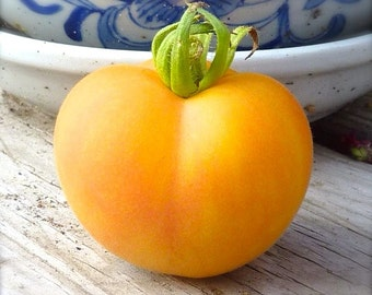 SALE Garden Peach Slightly Fuzzy Heirloom Variety Salad Tomato Delicate Velvety Texture and Excellent Gourmet Flavor Low Acid Rare Seeds