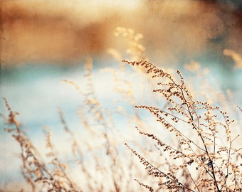 """Brown, Blue Nature Photography, grass wall art grasses print copper beige botanical picture branches decor branch photo, """"Silent Glow"""""""
