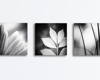 Black and White Canvas Set, neutral prints dark grey artwork gray canvases gallery wraps botanical photography modern wall art leaves decor