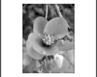 Flowers Poster, Black and White Large Scale Floral Poster, Macro Flowers, Spring Still Life Photography, Modern Botanical Art, Cottage Chic