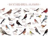 Alabama Backyard Birds Field Guide Art Print / Watercolor Painting / Wall Art / Nature Print / Bird Poster