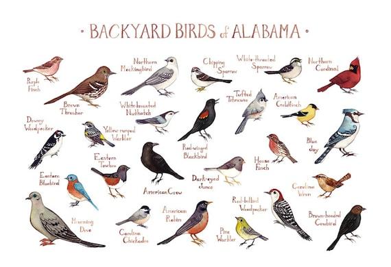 Alabama Backyard Birds Field Guide Art Print / Watercolor