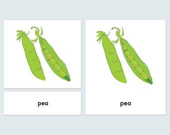 3 -Part Reading Cards -Montessori vegetable language cards-pdf download