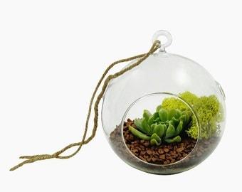 DESERT OASIS SUCCULENT terrarium globe- succulent terrarium, hanging terrarium, home decor, gift for any occasion, hostess gift