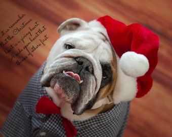 5 x 7 English Bulldog Christmas Card