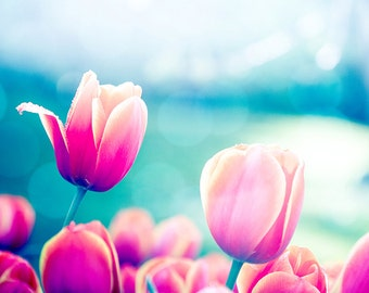 flower photography nature tulips photography floral 8x10 24x36 fine art photography spring wall decor nursery decor bedroom pink blue aqua
