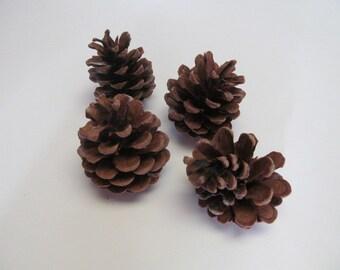 Set of 4 Medium Size Pinecones.