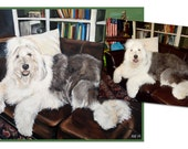 custom dog portrait pet oil painting english sheepdog puppy art great gift 14x18 made to order by Heather Hughes