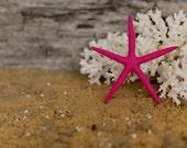 Beach Decor Pink Starfish Painted Starfish - Beach Wedding Decor, Painted Starfish, Starfish Nautical Decor, Natural Starfish, Starfish