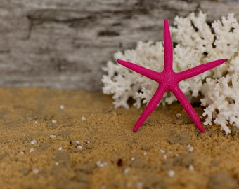 Beach Decor Pink Starfish Painted Starfish - Beach Wedding Decor, Painted Starfish, Starfish Nautical Decor, Natural Starfish, Starfish