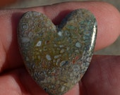 Dinosaur Bone Guitar Pick Heart shape Prehistoric Plectrum D-71
