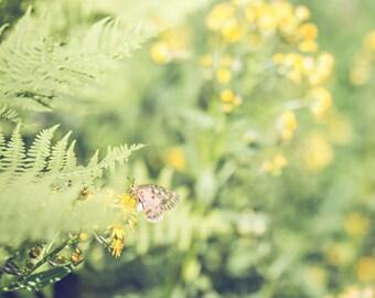 Nature Photography - Butterfly Photograph - Butterlfies - Nursery Art - Butterfly - Fine Art Photography Print - Green Yellow Home Decor