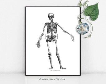 HUMAN SKELETON High Res Digital Image - printable antique illustration retooled for prints, towels, totes, pillows etc - fun wall art
