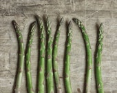 Dining Room Art, Rustic Food Photography, Vegetable Print, Farmhouse Kitchen Wall Art |'Asparagus'
