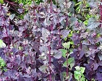 Purple Mountain Spinach Heirloom Orach Seeds Non GMO