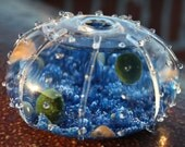Pelagia - Graceful Marimo Moss Aqua Garden - Two Japanese Good Luck Charms in Glass Urchin Vase