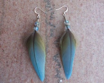 Harlequin Macaw Feather Earrings