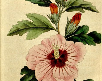 Flower print, Wall decor, Nature art, Botanical, Nature print, Nature, Botanical art, 83