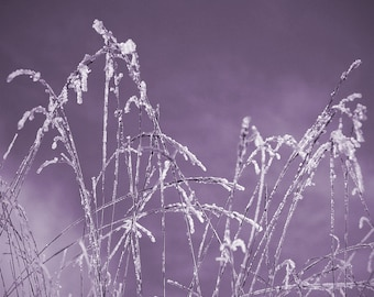 nature photo, country decor, country chic, winter photography, ethereal art, lilac, lavender, purple, mauve