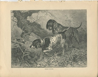 Vero Shaw - Antique Dog Print - Original lithograph  - 1881 Book Of The Dog - German Pointers