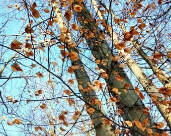 Swirling Winter Trees
