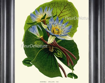 BOTANICAL PRINT HOUTTE  Art Print 130 Beautiful Blue Water Lily Waterlily Antique Large Flower Lake Nature Home Cottage Decor to Frame