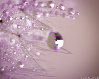 "Dandelion Art - purple dandelion closeup 8x10 prints 11x14 winter photography 16x20 purple bedroom wall decor flowers ""Sparkle in your Eyes"""